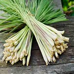 Lemongrass Fragrance Oil