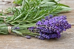 Lavender, Sage, & Rosemary Fragrance Oil