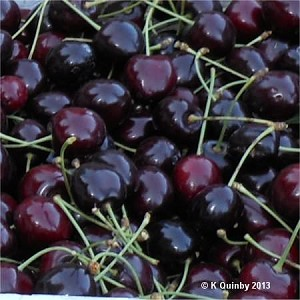 Black Cherry Fragrance Oil
