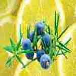 Lemon Juniper Fragrance Oil