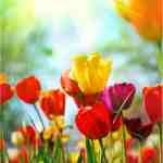Spring Renewal Fragrance Oil