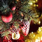 Christmas Tree Fragrance Oil
