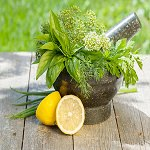Cool Citrus Basil BBW Type Fragrance Oil