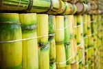 Rainforest Sugarcane BBW Type Fragrance Oil