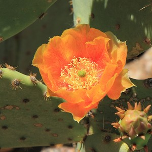 Baja Cactus Blossom - BBW Type Fragrance Oil