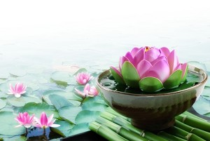 Bamboo And Lotus Flower Fragrance Oil Cierra Candles