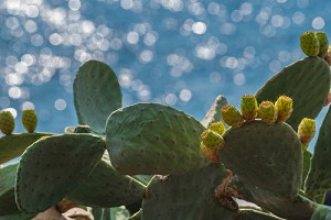 Cactus & Sea Salt Fragrance Oil