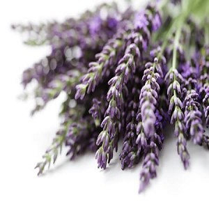 Lavender Fragrance Oil - RESTOCK EXPECTED WEEK OF JANUARY 25