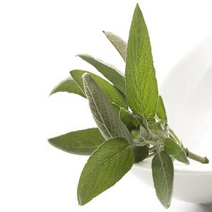 White Sage Fragrance Oil